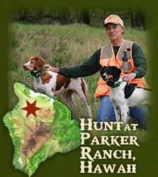 Hunt at Parker Ranch Hawaii